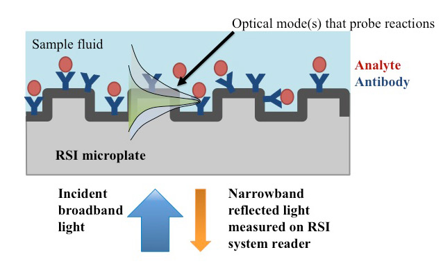 Figure 2.  (a) Schematic of a guided-mode resonance sensor. The optical resonant modes are two different polarizations of light that are excited on the sensor surface and used to probe the binding reactions.